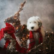 Holiday pet photo