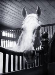 Horse closeup photo